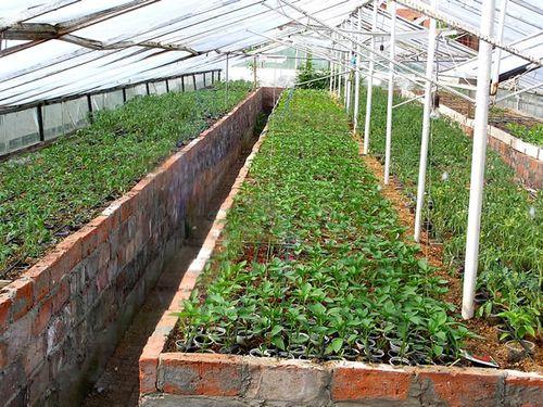 нюансы посадки растений,