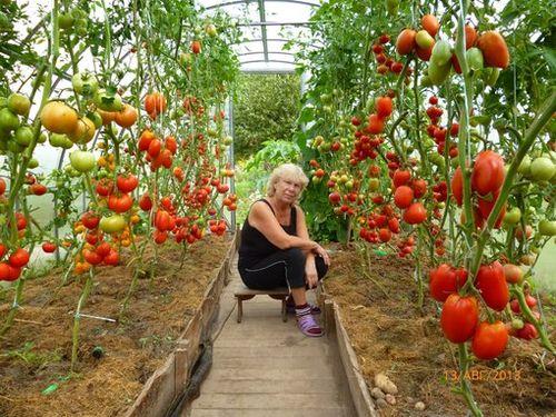 Высадка растений производится