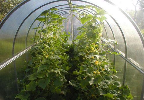 Комфортная температура-залог хорошего урожая