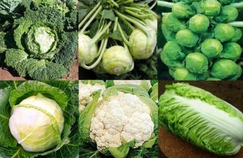 Выращиваем капусту