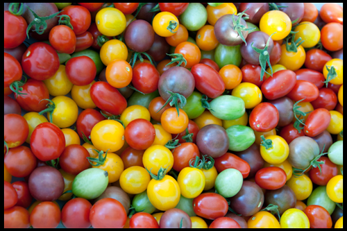 Выбираем томаты какие посадить?
