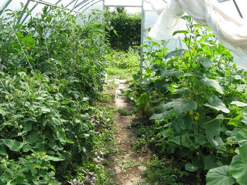 Теплицы для выращивания овощей круглый год