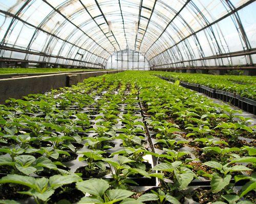 Бизнес план хозяйства по выращиванию плодовых деревьев 68
