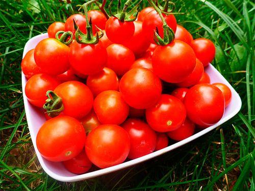 sorta_pomidorov_dlya_teplic_1