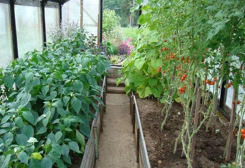 mozhno_li_vyrashhivat_ogurcy_i_pomidory_3