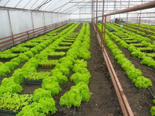 Правила выращивания растений в теплицах