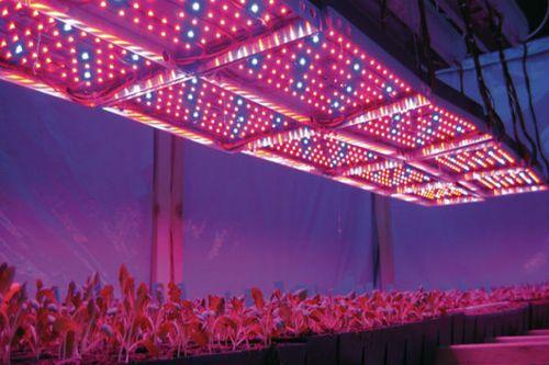 Как организовать искусственное освещение теплицы