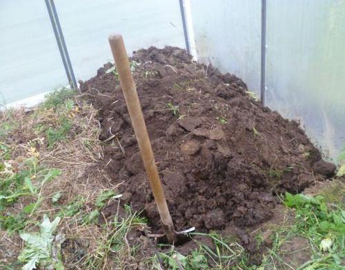 Особенности подготовки почвы в теплице
