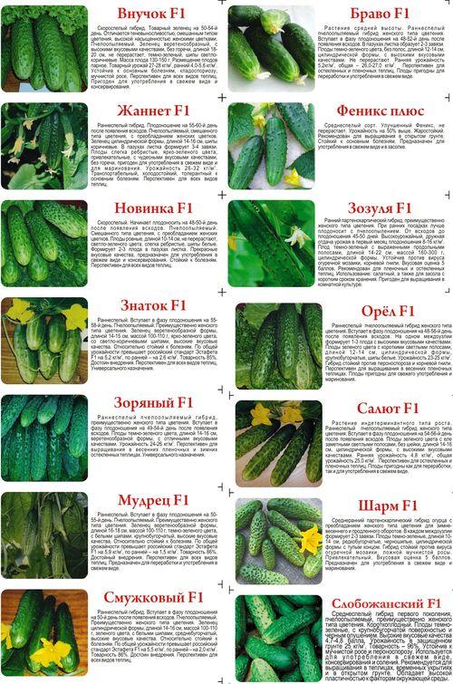 Как выбрать хорошие семена огурцов для теплицы