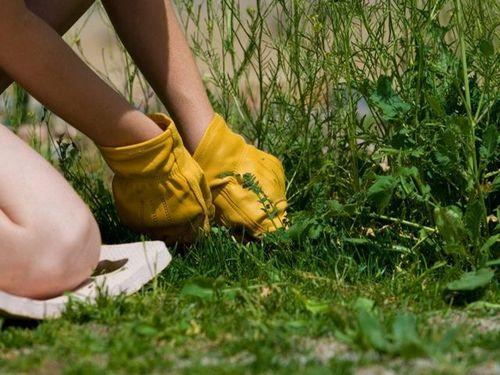 Удаление травы вручную