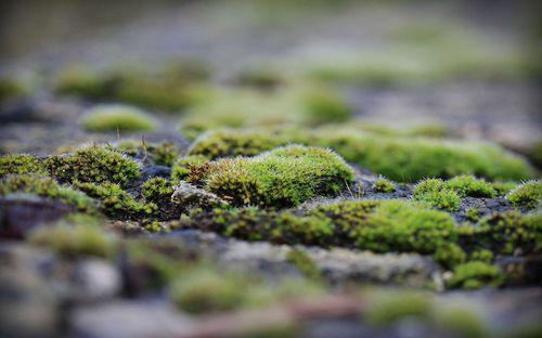 Зеленеет земля в теплице