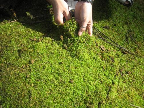Причины, почему зеленеет земля в теплице