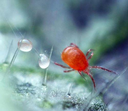 Эффективные меры борьбы с паутиной в теплице