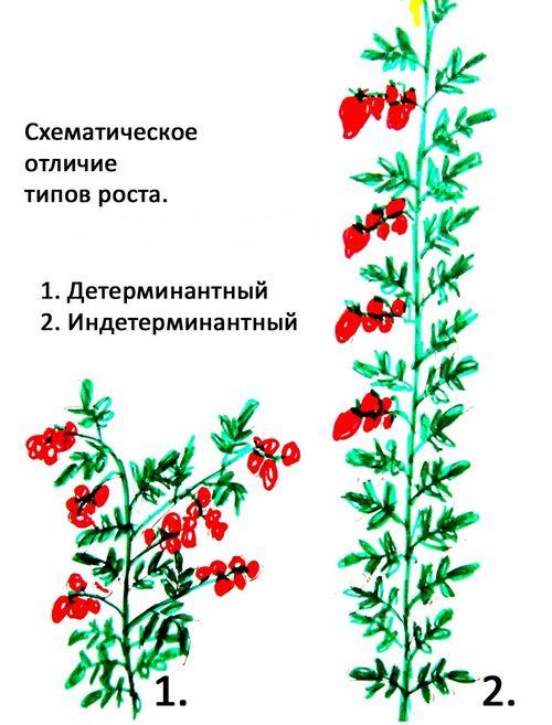 Разница между видами помидор