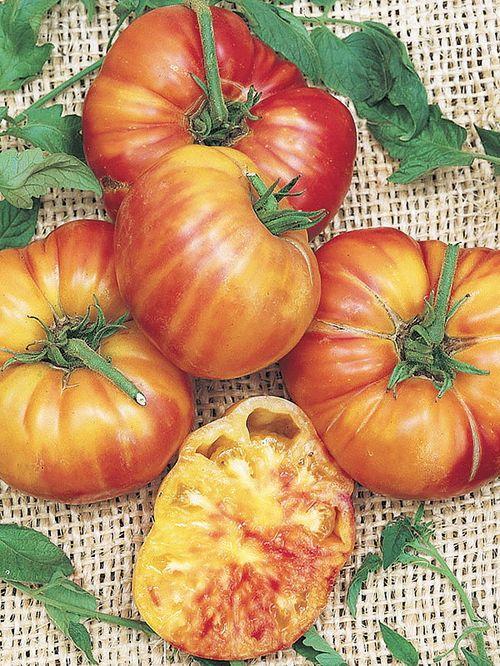 Обзор лучших сортов желтых томатов для посадки