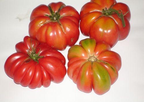 Созревшие помидоры Японский краб