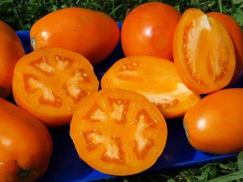Золотой томат