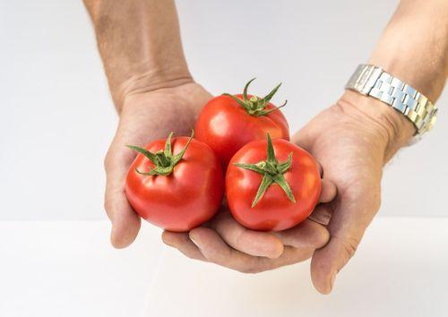 Виды и особенности томатов сорта Любаша