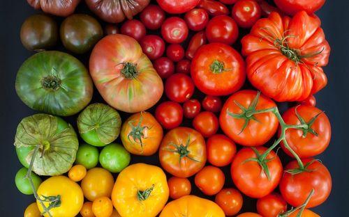 Обзор лучших сортов томатов для Средней полосы