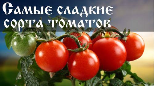 Лучшие виды томатов сахарных сортов