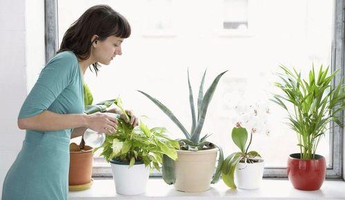 Благоприятные дни для посадки растений по лунному календарю