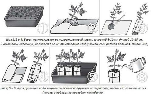Руководство как выращивать рассаду в улитке