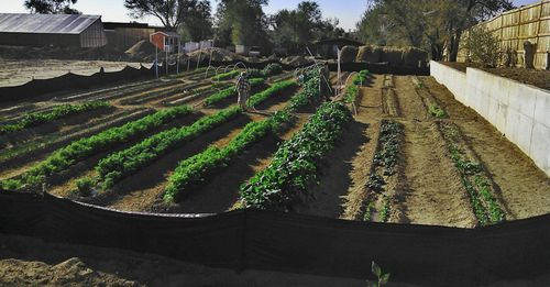 Огород на узких грядках