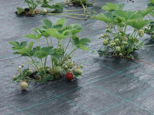 Основные способы мульчирования почвы