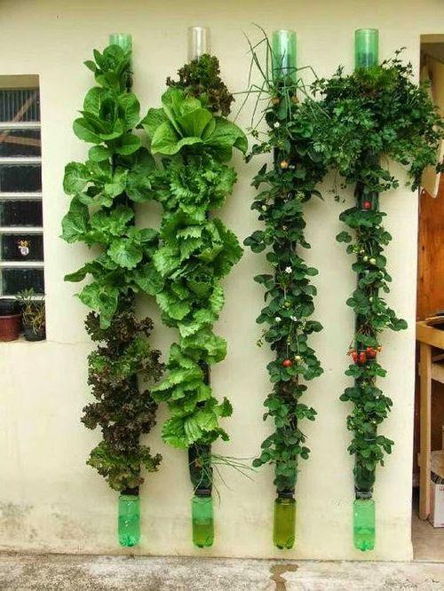 Выращивание цветов и овощей