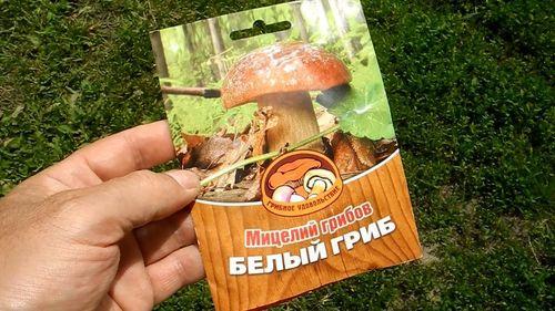 Правила выращивания грибов в теплице
